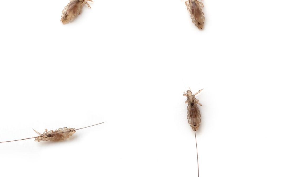 Worst Lice Story