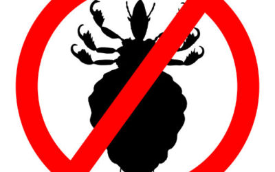 Head Lice Retreat Lockdown